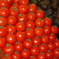 Pomidory spaghetti - przykład wzoru